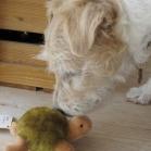 2. Skildpadde og Muffin
