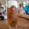 356_01 Den lokale øl