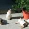 Katte isolen